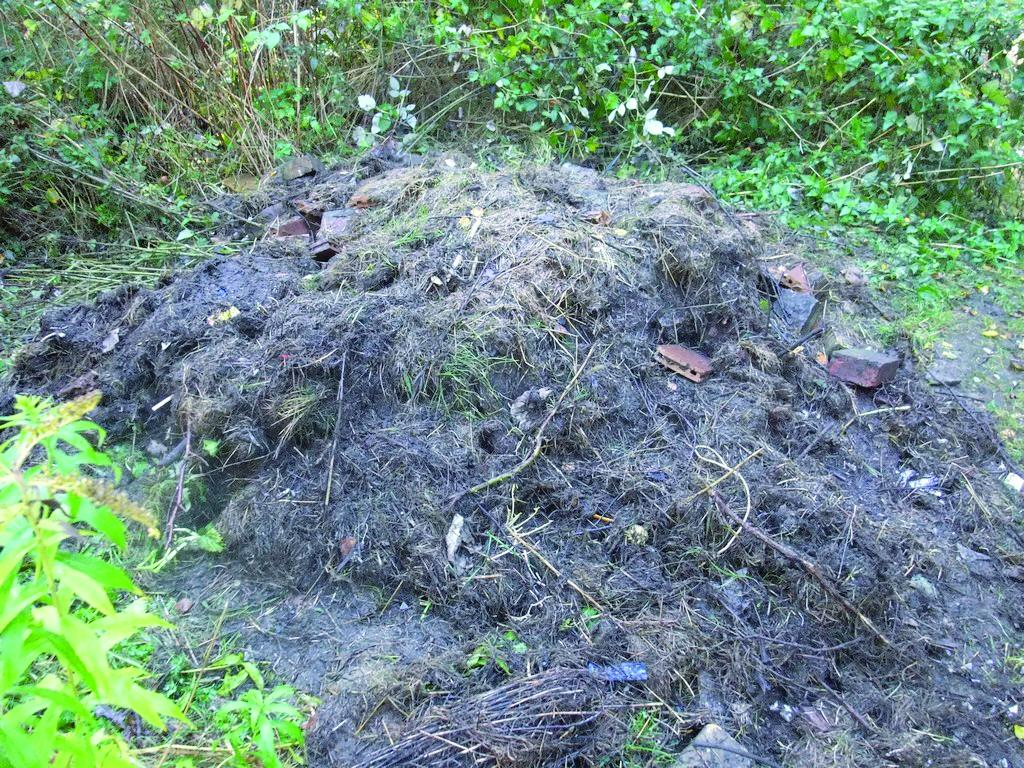 illegale Ablagerung von Grünschnitt